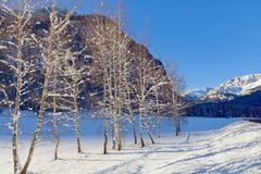 Árvores de vidoeiro cobertos de neve que alinham a estrada do campo, cena do inverno Dia frio ensolarado Fotografia de Stock Royalty Free