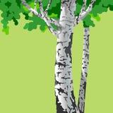 Árvores de vidoeiro dos desenhos animados com tronco branco e a coroa verde Fotografia de Stock