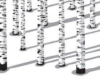 Árvores de vidoeiro na neve Fotografia de Stock
