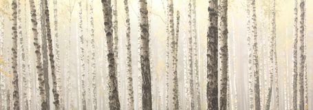 Árvores de vidoeiro no bosque do vidoeiro foto de stock