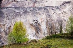 Árvores de vidoeiro novas na borda do poço do lignite & do x28; coa marrom fotos de stock