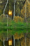 Árvores de vidoeiro perto da água Imagens de Stock Royalty Free