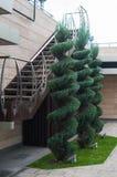 Árvores decoradas bonitas perto da construção, projeto da paisagem Fotos de Stock Royalty Free