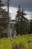 Árvores demulidas e inoperantes Imagens de Stock
