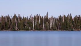 Árvores descoradas no lago grande, Oregon, floresta nacional de Willamette Fotografia de Stock