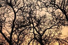 Árvores desencapadas Fotos de Stock Royalty Free
