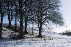 Árvores desencapadas Imagens de Stock
