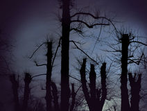 Árvores desencapadas assustadores fotografia de stock