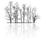 Árvores desencapadas com reflexão ilustração stock