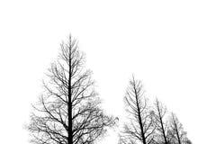4 árvores desencapadas contra um fundo branco Imagens de Stock Royalty Free