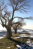 Árvores desencapadas da montanha Imagem de Stock Royalty Free
