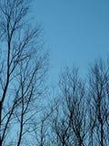 Árvores desencapadas do inverno foto de stock