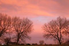 Árvores desencapadas do inverno e céu vermelho bonito Fotografia de Stock