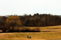Árvores desencapadas do inverno no campo rural do campo imagens de stock