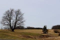 Árvores desencapadas do inverno no campo rural do campo imagens de stock royalty free