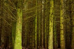 Árvores desencapadas na floresta fotos de stock