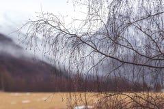 Árvores desencapadas na névoa Imagens de Stock Royalty Free