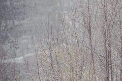 Árvores desencapadas na névoa Fotos de Stock Royalty Free