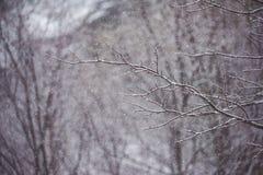 Árvores desencapadas na névoa Imagem de Stock