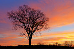 Árvores desencapadas no alvorecer Imagens de Stock Royalty Free