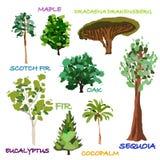Árvores desenhadas mão Fotografia de Stock