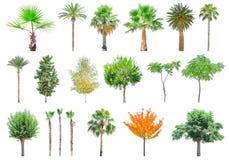 Árvores diferentes isoladas no branco Imagens de Stock