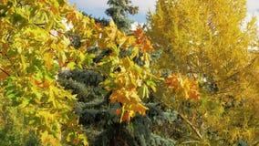 Árvores diferentes no outono video estoque