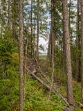 Árvores do arco em montanhas imagens de stock royalty free
