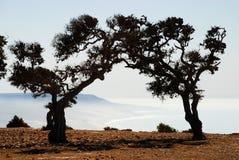 Árvores do argão (argania spinosa) pelo mar. Imsouane, Souss-Massa-Draâ, Marrocos Foto de Stock