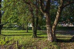 Árvores do beira-rio Imagem de Stock