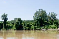 Árvores do beira-rio Fotografia de Stock Royalty Free