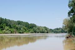 Árvores do beira-rio Foto de Stock Royalty Free