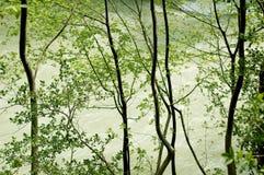 Árvores do beira-rio fotos de stock royalty free