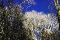 Árvores do céu imagens de stock