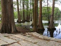 Árvores do close-up das pedras de pavimentação na água foto de stock royalty free