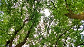 árvores do colorul na floresta surpreendente foto de stock royalty free