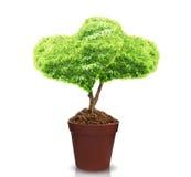 Árvores do coração em uns potenciômetros Imagem de Stock