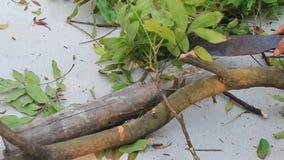 Árvores do corte da faca vídeos de arquivo