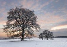 Árvores do crepúsculo da neve Imagens de Stock