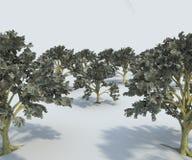 Árvores do dinheiro Fotos de Stock Royalty Free