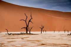 Árvores do espinho do camelo em Sossusvlei em Namíbia fotografia de stock