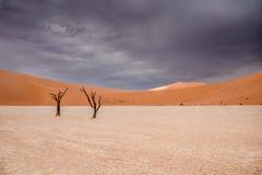 Árvores do espinho do camelo em Sossusvlei em Namíbia fotos de stock royalty free