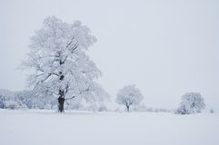 Árvores do inverno Imagem de Stock