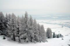 Árvores do inverno Foto de Stock