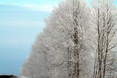 Árvores do inverno Fotografia de Stock