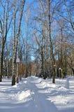 Árvores do inverno cobertas com a neve contra o céu azul Foto de Stock Royalty Free