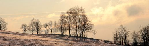 Árvores do inverno da paisagem fotografia de stock royalty free