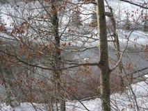 Árvores do inverno e lago, Baviera fotos de stock