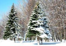 Árvores do inverno em abril Imagem de Stock