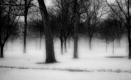 Árvores do inverno em Michigan Fotos de Stock